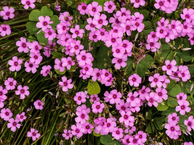 Fleurs violettes sur fond de nature dans le parc