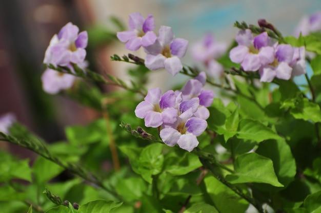 Fleurs violettes insectes et abeilles sucent