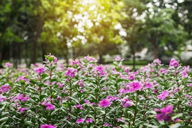 Fleurs violettes avec la lumière du soleil