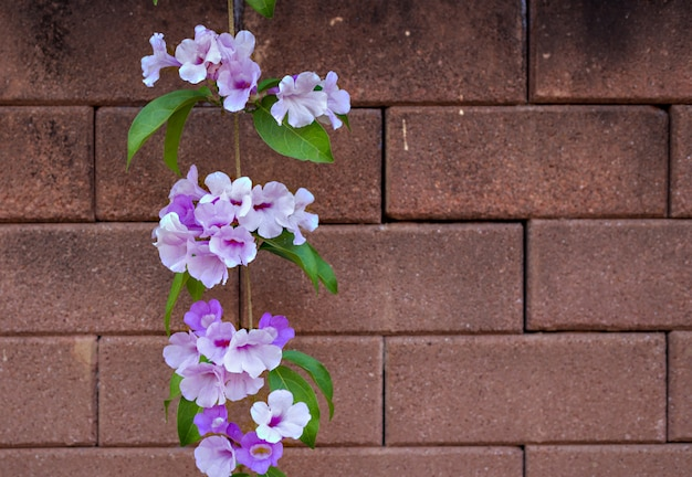 Fleurs violettes sur le mur de briques