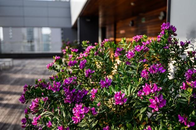 Fleurs violettes sur la piscine sur le toit dans un flou.