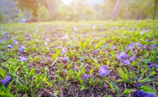 Fleurs violettes sur le sol avec la lumière du soleil