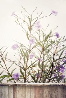 Fleurs violettes et vieille planche de bois pour l'affichage du produit, flou et couleur vintage tonique