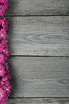 Fleurs de viscaria en fleurs roses