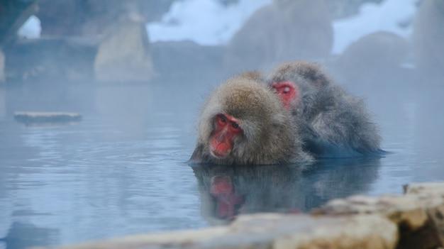 Flocons de faune observent la fourrure japon