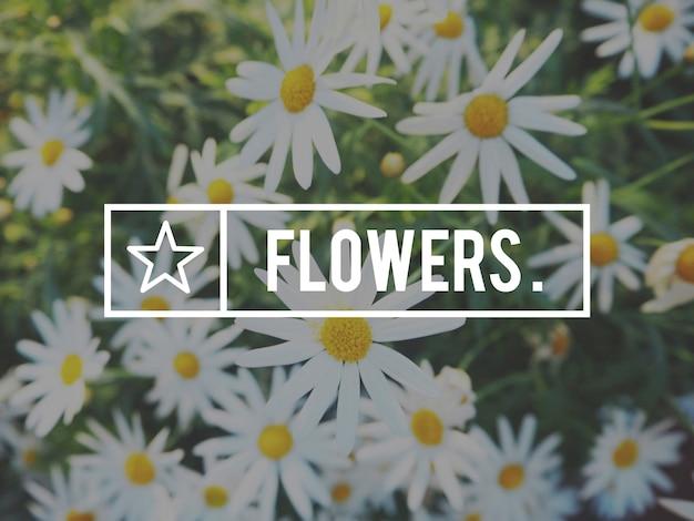 Floraison botanique fleur jardin nature été
