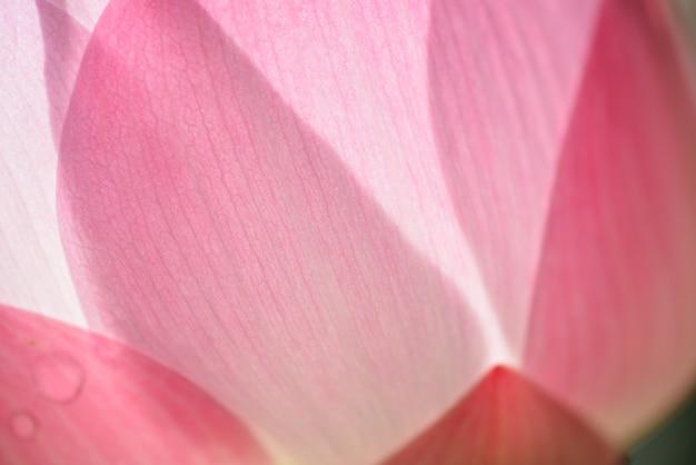 Floraison de fleurs roses avec une feuille verte closeup pour le fond