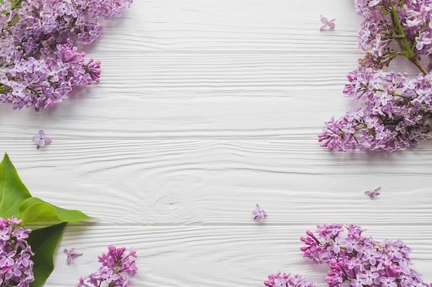 Floraison lilas sur blanc
