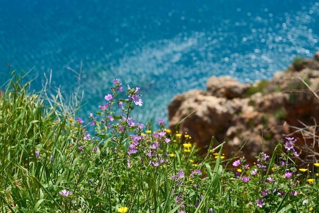 Floraison de plantes jaunes dans la nature
