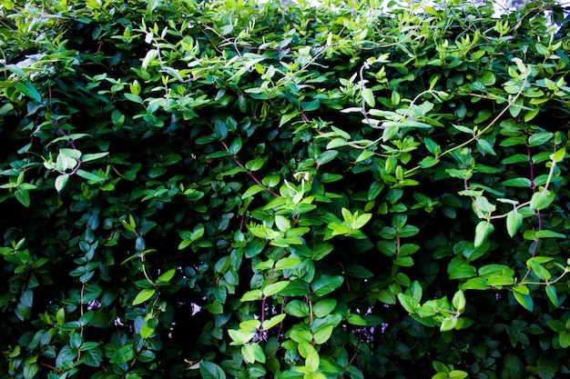 Floral fond feuilles vert naturel fond arbre buisson