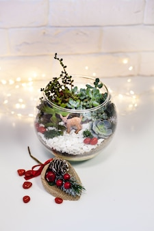 Florarium - composition de plantes succulentes, décor à la maison, deror de noël, cadeau du nouvel an