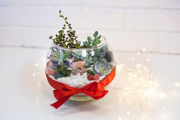 Florarium - composition de plantes succulentes, pierre, sable et verre, élément d'intérieur, décor à la maison, deror de noël, cadeau de nouvel an
