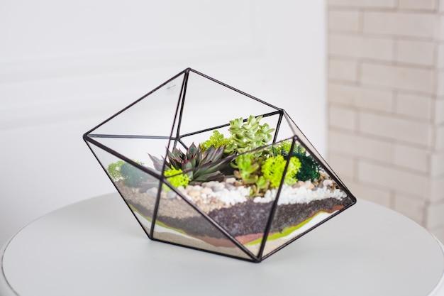 Florarium, composition de plantes succulentes, pierre, sable et verre, élément d'intérieur, décoration intérieure, terarium de verre