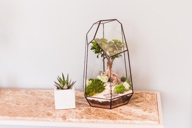 Florarium - composition de plantes succulentes, de pierre, de sable et de verre, élément d'intérieur, décoration intérieure, terarium de verre