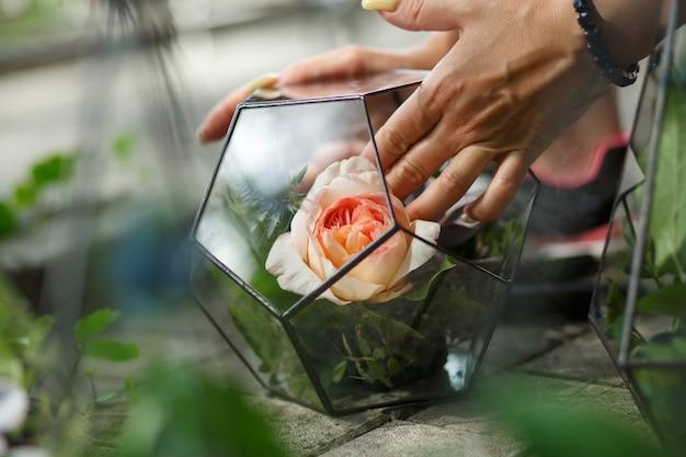 Florarium avec des fleurs fraîches succulentes et roses. décoration de fleurs fraîches