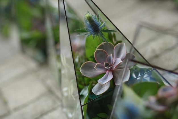 Florarium avec des fleurs fraîches et succulentes.