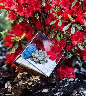 Florarium en verre en forme de cube avec plante succulente à l'intérieur dans le jardin et buisson à fleurs rouges en arrière-plan