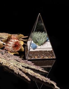 Florarium en verre avec des plantes succulentes à l'intérieur isolé sur acrylique noir. plantes succulentes dans une boîte en verre.
