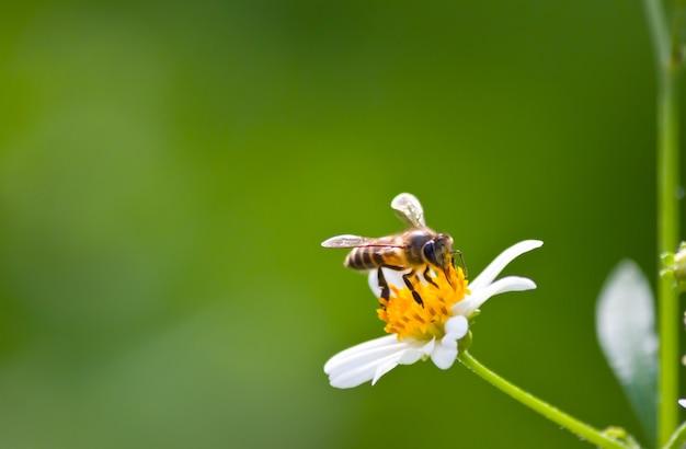 Flore fond printemps pétale gros plan