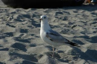 Floride, la plage