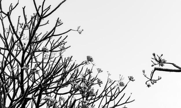 Flou abstrait d'une branche d'arbre dans ton sombre