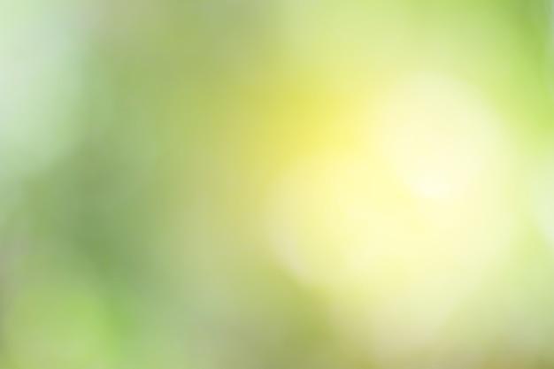Flou d'arrière-plan naturel vert pour la conception.