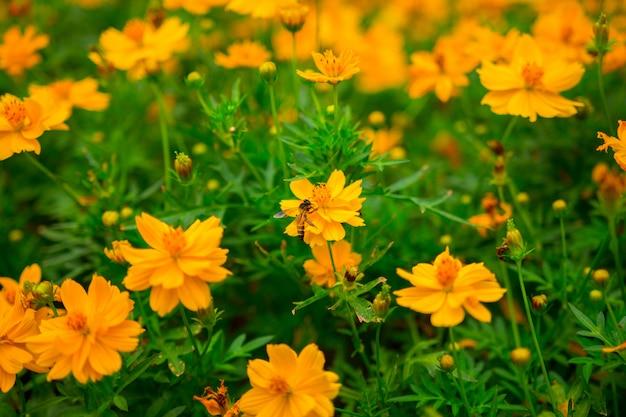 Flou artistique de belles fleurs jaunes