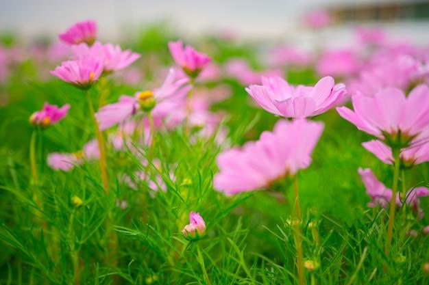 Flou artistique de belles fleurs violettes