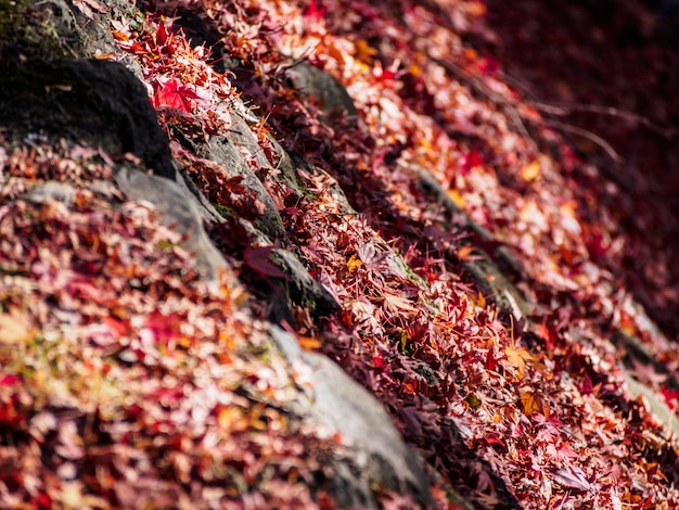 Flou artistique de feuilles d'érable rouge