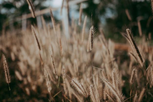 Flou artistique de fleur d'herbe le matin qui donne la solitude
