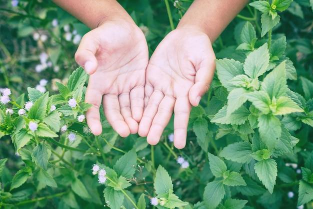 Flou artistique et flou gros plan la main de l'enfant avec une fleur nature