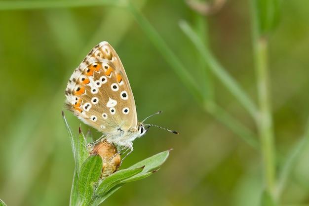Flou d'un beau papillon sur un bouton de fleur blanche dans un pré