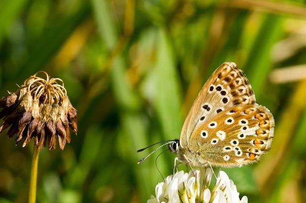 Flou d'un beau papillon sur une fleur blanche dans un pré