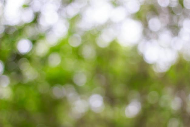 Flou de bokeh vert sur fond d'arbre