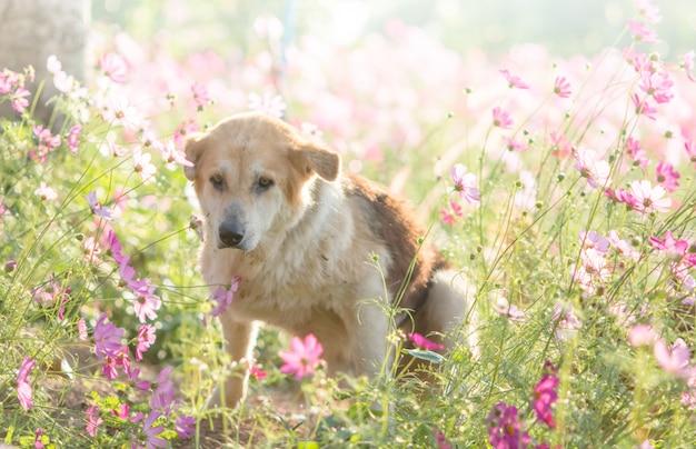 Flou chien et fleur pour le fond