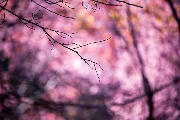 Flou fond abstrait rose clair