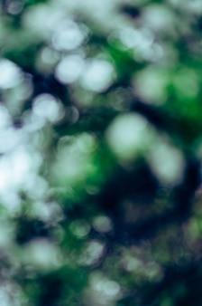 Flou fond nature vert