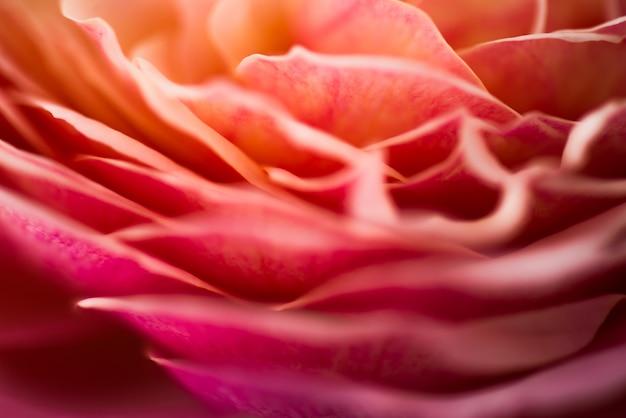 Flou fond rose pastel