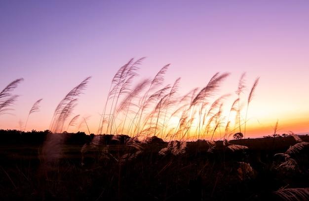 Flou d'herbe et lumière dorée au crépuscule