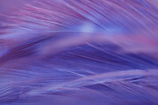 Flou oiseau poulets plume texture pour le fond