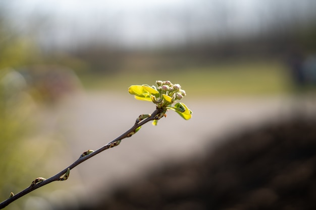 Flou d'une pousse de plante