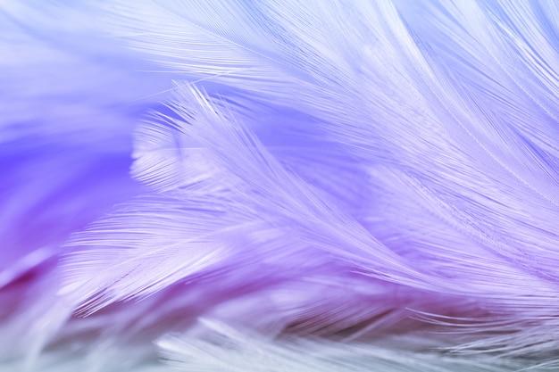 Flou des styles et couleur douce de la texture de plume de poulet pour le fond, abstrait coloré