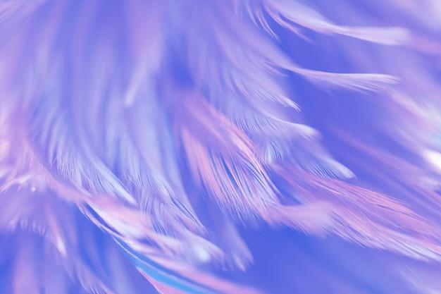 Flou de la texture de plumes de poulets oiseaux pour le fond