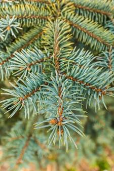 Flou vertical d'aiguilles de sapin sur une branche
