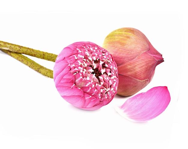 Flowwes de pétales de lotus sur blanc