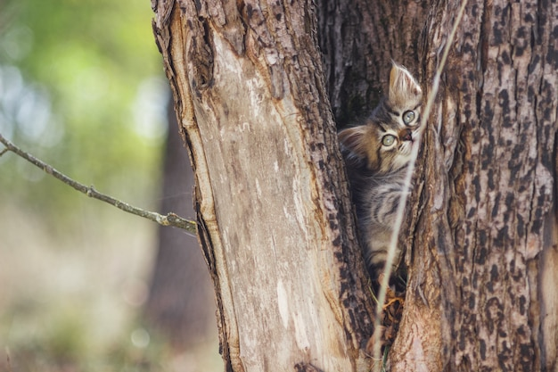 Fluffy chaton seul dans le creux d'un arbre en été