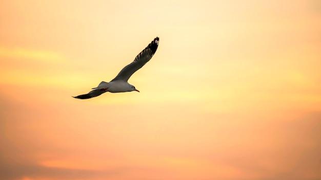Flying seagull avec ciel crépusculaire pendant le coucher du soleil au centre de loisirs de bang pu, samut prakan, thaïlande. célèbre point de repère de voyage pour voir les mouettes de migration en hiver.
