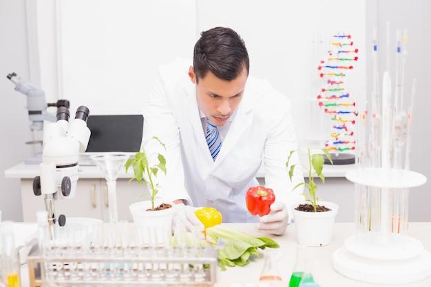Focus scientifique examinant les poivrons