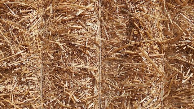 Foin dans une balle dans une journée ensoleillée en gros plan produit alimentaire pour le concept d'élevage d'animaux de ferme