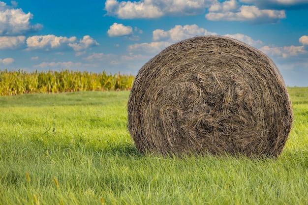Foin d'herbe sous un ciel bleu nuageux dans un paysage agricole.
